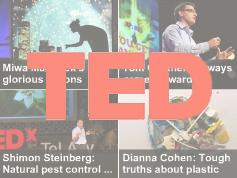 TEDxPalmaCeia